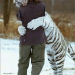 tiger hugging man BKbral nocomm flickr